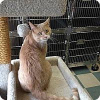 Adopt A Pet :: Noregard - Warren, OH