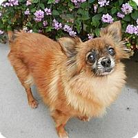 Adopt A Pet :: Hannah - Escondido, CA