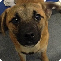 Adopt A Pet :: Andy - Lewisville, IN