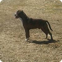 Adopt A Pet :: Biggs - Northumberland, ON
