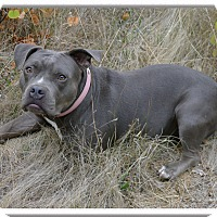 Adopt A Pet :: Mellie loves dogs - Sacramento, CA