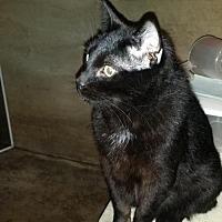 Adopt A Pet :: FDR - Cedar Rapids, IA