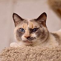 Adopt A Pet :: Crystal - Arlington/Ft Worth, TX