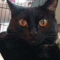 Adopt A Pet :: Kuduko - St. Louis, MO