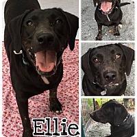 Adopt A Pet :: Ellie - Waxhaw, NC