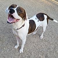 Adopt A Pet :: KANYE - Phoenix, AZ