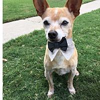 Adopt A Pet :: Peanut Butter - Pleasanton, CA