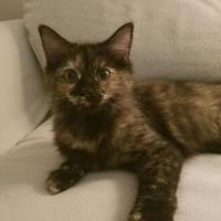 Adopt A Pet :: Afton - Richmond, VA