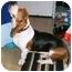 Photo 3 - Basset Hound Dog for adoption in Berkeley, California - Rickey
