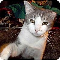 Adopt A Pet :: Mona-Monroe - Toluca Lake, CA