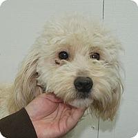 Adopt A Pet :: GRACIE - W. Warwick, RI