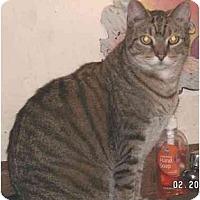 Adopt A Pet :: Kylee - Milford, OH