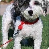 Adopt A Pet :: Zenith - Gilbert, AZ