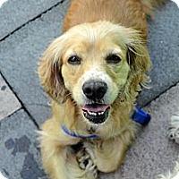Adopt A Pet :: Florence - New York, NY