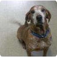 Adopt A Pet :: Bodie - Douglas, MA