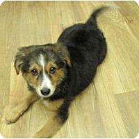 Adopt A Pet :: Reilly - apache junction, AZ