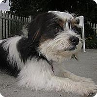 Adopt A Pet :: JONZEY - W. Warwick, RI