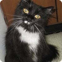 Adopt A Pet :: Jazzie - Dallas, TX