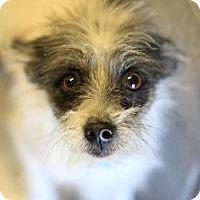 Adopt A Pet :: Asparagus - Phoenix, AZ