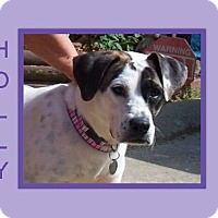 Adopt A Pet :: HOLLY - Dallas, NC