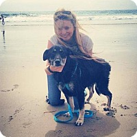 Adopt A Pet :: Sullivan Rutherford - Vista, CA