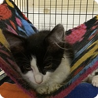 Adopt A Pet :: Fiat - Byron Center, MI