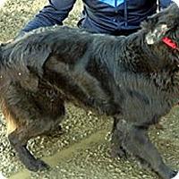 Adopt A Pet :: T4 Truffles - BIRMINGHAM, AL