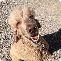 Adopt A Pet :: Hank - Arenas Valley, NM