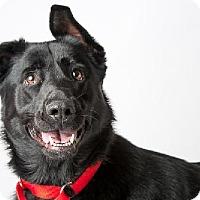 Adopt A Pet :: Luna - Shaftsbury, VT