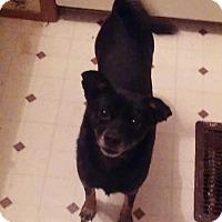 Adopt A Pet :: Posie - Bardonia, NY