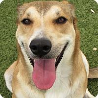 Adopt A Pet :: Autumn - West Hartford, CT