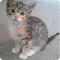 Adopt A Pet :: Anni - Huntley, IL