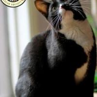 Domestic Shorthair/Domestic Shorthair Mix Cat for adoption in Spruce Grove, Alberta - Jerry
