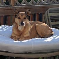 Adopt A Pet :: Fairy - Calgary, AB