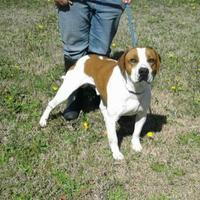 Hound (Unknown Type) Mix Dog for adoption in Dublin, Georgia - Lyle