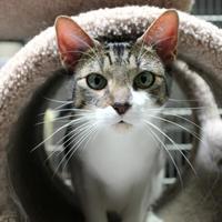 Adopt A Pet :: Maureen - St. Petersburg, FL