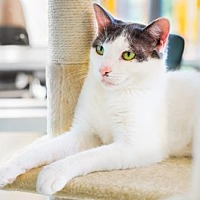 Adopt A Pet :: Hermie - Palm Springs, CA