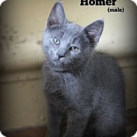 Adopt A Pet :: Homer - Glen Mills, PA