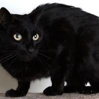 Adopt A Pet :: Paul - Reno, NV