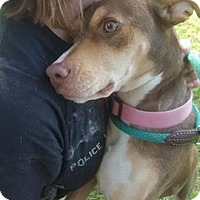 Adopt A Pet :: Sadie~adopted! - Southbury, CT