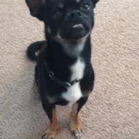 Adopt A Pet :: Rupert - Irmo, SC