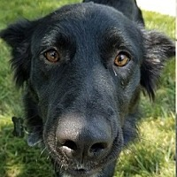 Adopt A Pet :: Jakey - Silver Spring, MD
