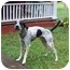 Photo 1 - Bluetick Coonhound/Jack Russell Terrier Mix Dog for adoption in Bloomsburg, Pennsylvania - Cookie