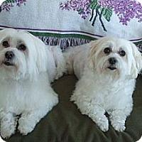 Adopt A Pet :: Safi and Shaba - Blairstown, NJ