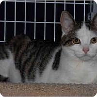 Adopt A Pet :: Aiden - Warminster, PA