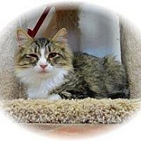Adopt A Pet :: Jayne - Shelton, WA