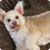 Adopt A Pet :: TIFFANY - Mission Viejo, CA