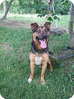 German Shepherd Dog Mix Dog for adoption in Louisville, Kentucky - Barney