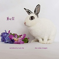 Adopt A Pet :: Bell - Jurupa Valley, CA