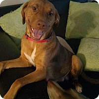 Adopt A Pet :: Roxanne - Burlington, NJ